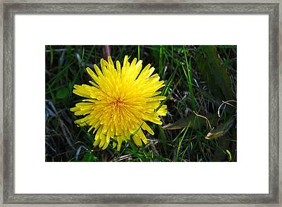 Framed Print featuring the photograph Little Burst Of Sunshine by Marilynne Bull