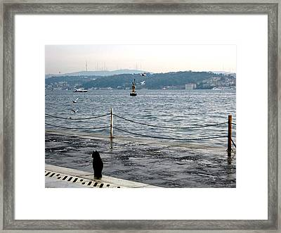 Little Cat Sits By The Bosphorus Framed Print