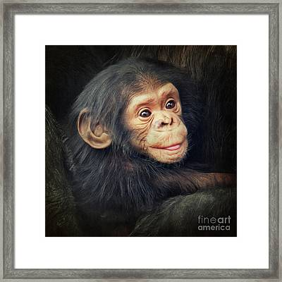 Little Chimpanzee Framed Print by Angela Doelling AD DESIGN Photo and PhotoArt