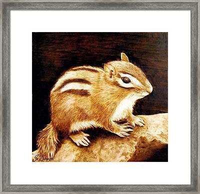 Little Chipper Framed Print by Jo Schwartz