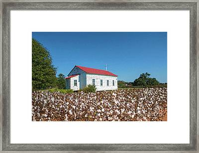 Little Church In The Cotton Field Framed Print by Bonnie Barry
