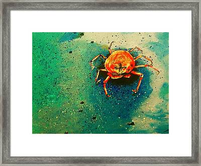 Little Crab Framed Print by Heather  Gillmer
