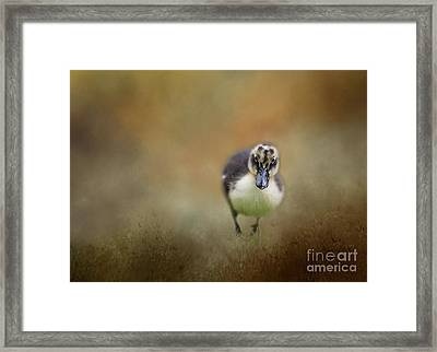 Little Cutie Framed Print