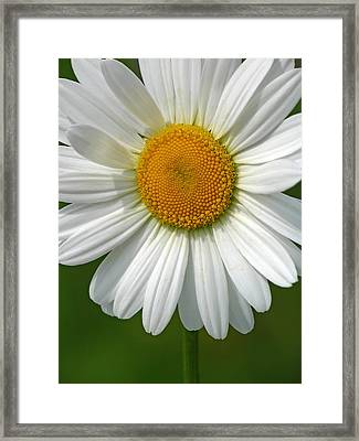 Little Darling Framed Print