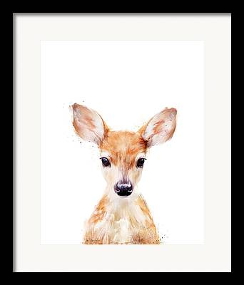 Fawn Framed Prints