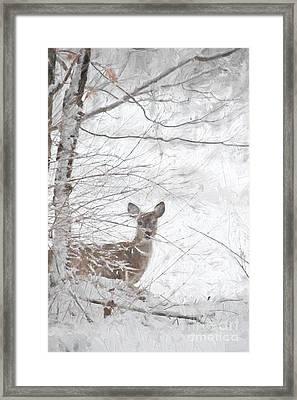 Little Doe In Snow Framed Print by Benanne Stiens