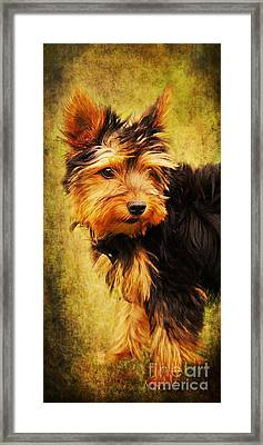 Little Dog II Framed Print by Angela Doelling AD DESIGN Photo and PhotoArt