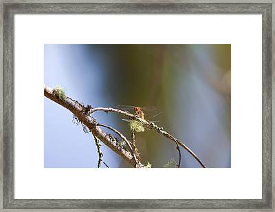 Little Dragonfly Framed Print by Gary Smith