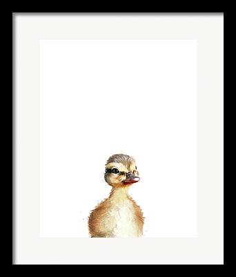 Duck Framed Prints