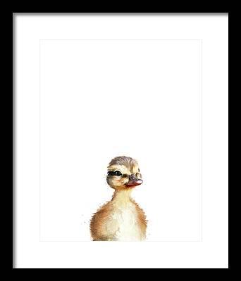 Baby Duck Framed Prints