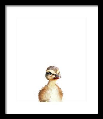 Mallard Framed Prints
