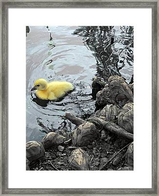 Little Ducky 2 Framed Print by Angelina Vick