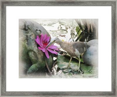 Little Egret Framed Print by Sergey Lukashin