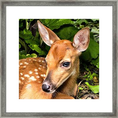 Little Fawn Framed Print