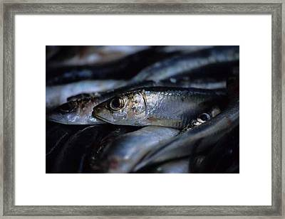 Little Fish At The Rialto Market In Venice Framed Print by Michael Henderson