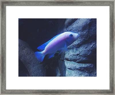 Little Fish Framed Print