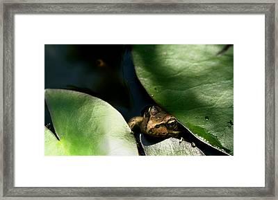 Little Friend Framed Print by Robert Nankervis
