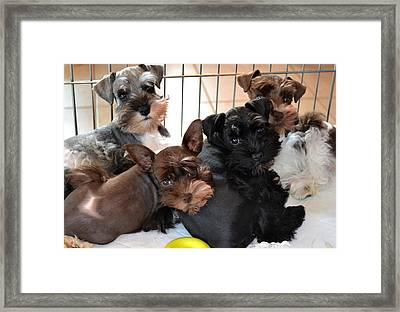 Little Friends Framed Print by Doug Powell