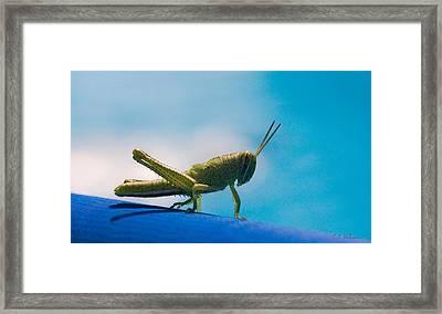 Little Grasshopper Framed Print by Christopher Holmes
