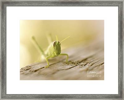 Little Grasshopper Framed Print