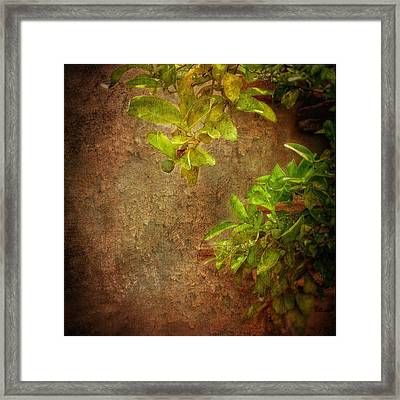 Little Green Apples Framed Print by Colleen Taylor