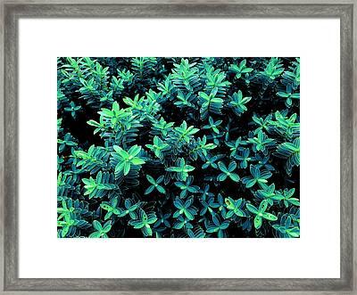Little Green Crosses Framed Print