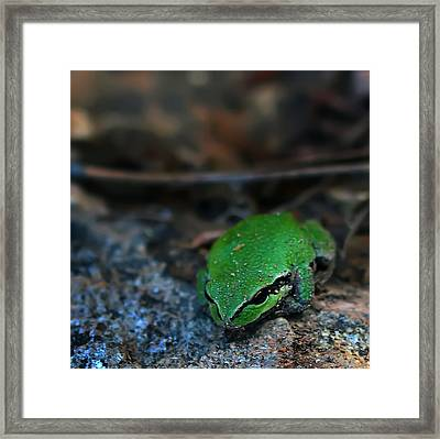 Little Green Frog Framed Print