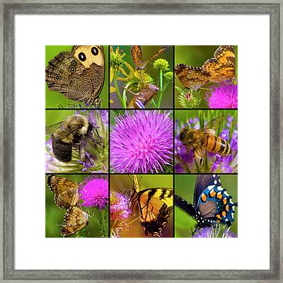 Little Guys  Framed Print by Betsy Knapp