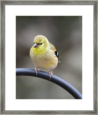 Little Hungry Bird Framed Print by Jimmie Bartlett