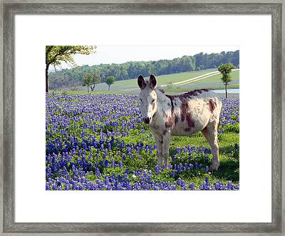 Little Jesus Donkey Framed Print