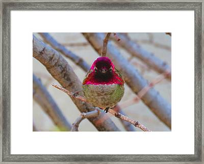 Little Jewel All Aglow Framed Print