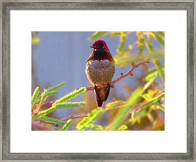 Little Jewel With Wings Fourth Version Framed Print