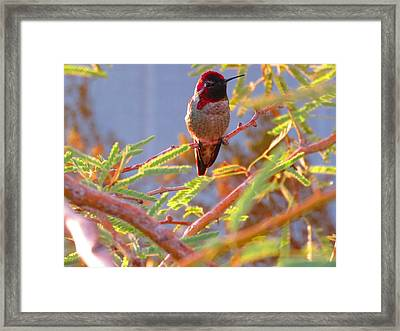 Little Jewel With Wings Framed Print