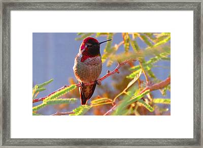 Little Jewel With Wings Second Version Framed Print