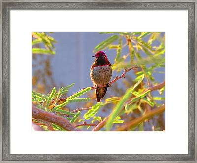 Little Jewel With Wings Third Version Framed Print
