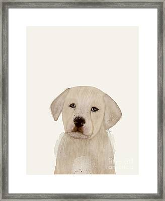 Framed Print featuring the painting Little Labrador by Bri B