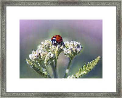 Little Lady On Top Framed Print by Bill Tiepelman