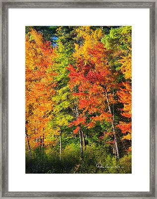 Little Lake Foliage 0515 Framed Print