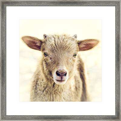 Little Lamb Framed Print