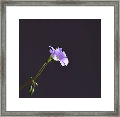 Little Lavender Flowers Framed Print