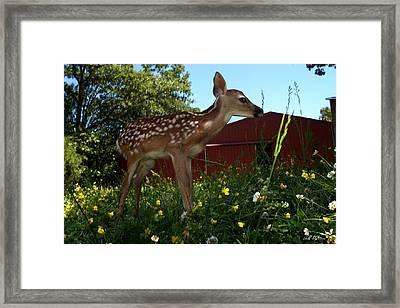 Little Lochem Framed Print by Bill Stephens