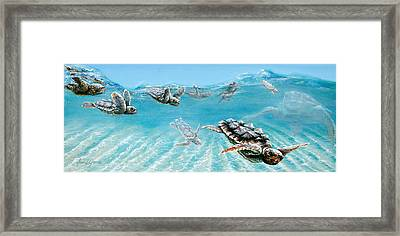 Little Loggerheads Framed Print
