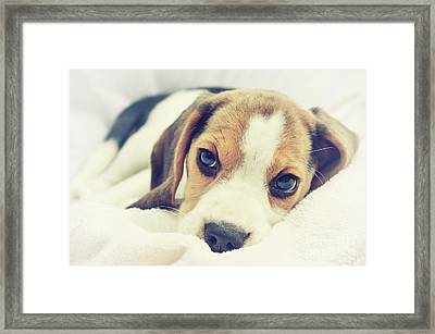 Little Luna  Framed Print by Angela Doelling AD DESIGN Photo and PhotoArt