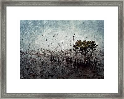 Little Mangrove Framed Print by Margaret Hormann Bfa