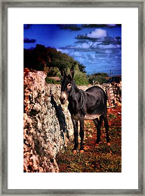 Little Mediterranean Donkey Dream Color With White Eyes And Belly  Hdr By Pedro Cardona Framed Print by Pedro Cardona Llambias