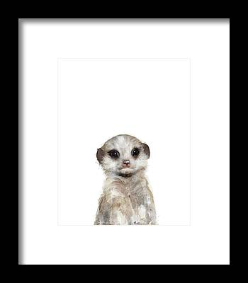 Meerkat Framed Prints