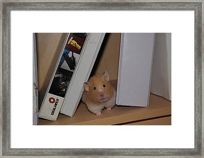 Little Missy Is Watching Framed Print