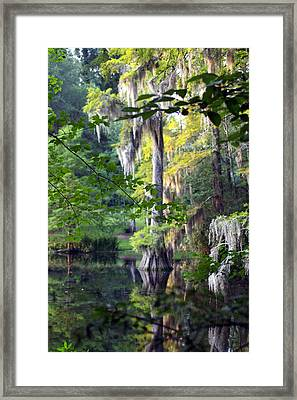 Little Moss Framed Print by Don Prioleau