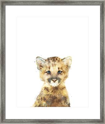 Little Mountain Lion Framed Print by Amy Hamilton