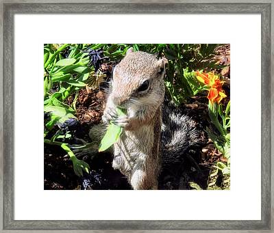 Little Nibbler Framed Print